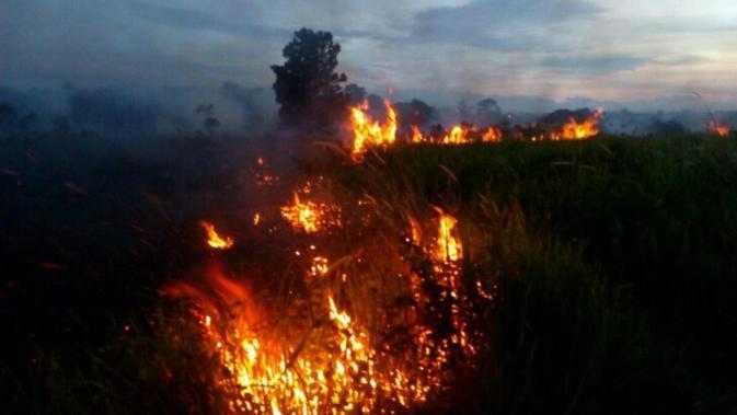 Pembakar lahan mengubah pola pembakaran dengan memanfaatkan kelemahan petugas. Akibatnya, kabut asap kembali melanda Riau. (Liputan6.com/M syukur