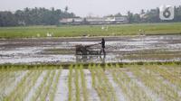 Petani tengah menggarap sawah di Kabupaten Tangerang, Senin (9/8/2021). Mentan Syahrul Yasin Limpo mengatakan sektor pertanian tahan terhadap dampak pandemi COVID-19 yang menyebabkan pertumbuhan ekonomi di sektor lain negatif, sementara di pertanian selalu positif. (Liputan6.com/Angga Yuniar)