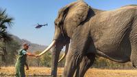 Foto gajah yang dijepret Pangeran Harry tuai protes warganet. (dok. Instagram @sussexroyal/https://www.instagram.com/p/Bwj2roEBbwL/)