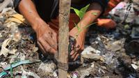 Bibit pohon mangrove yang ditanam di atas tumpukan sampah kawasan hutan mangrove Ecomarine, Jakarta Utara, Minggu (18/3). Bibit mengrove itu ditanam petugas Sudin Lingkungan Hidup dibantu Petugas Prasarana dan Sarana Umum. (Liputan6.com/Arya Manggala)