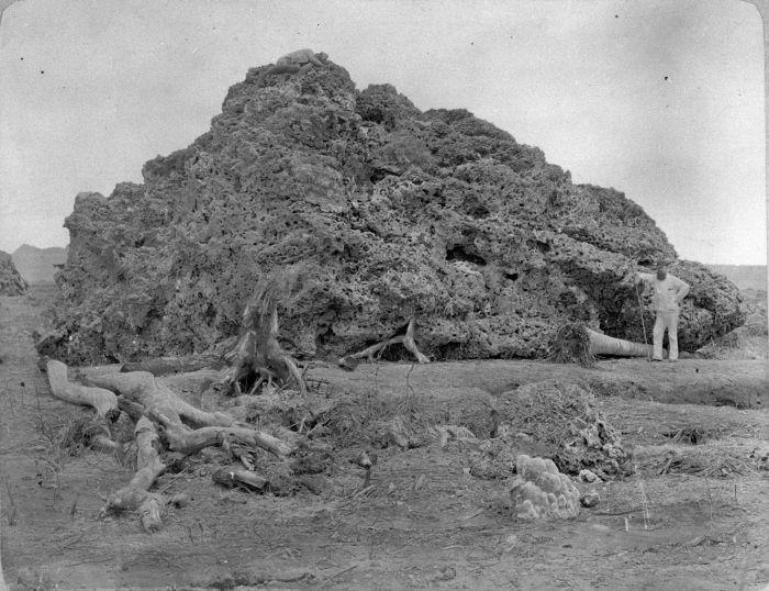 Dampak letusan Krakatau 1883, karang di dasar laut naik ke daratan (Wikipedia)