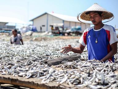 Pekerja mengeringkan ikan asin di wilayah kampung nelayan Muara Angke, Jakarta, Senin (3/8/2015). Musim kemarau membuat produksi ikan asin di daerah tersebut meningkat 50 persen. (Liputan6.com/Faizal Fanani)
