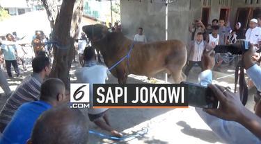 Presiden Jokowi menghadiahkan seekor sapi kurban seberat lebih dari 1 ton untuk warga Kupang Nusa Tenggara Timur. Sapi diberikan oleh gubernur NTT Viktor Bungtilu Laiskodat . Sapi dibeli dari peternak lokal seharga Rp 75 juta.