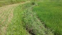 Ilustrasi lahan pertanian. (Dok. Kementan)