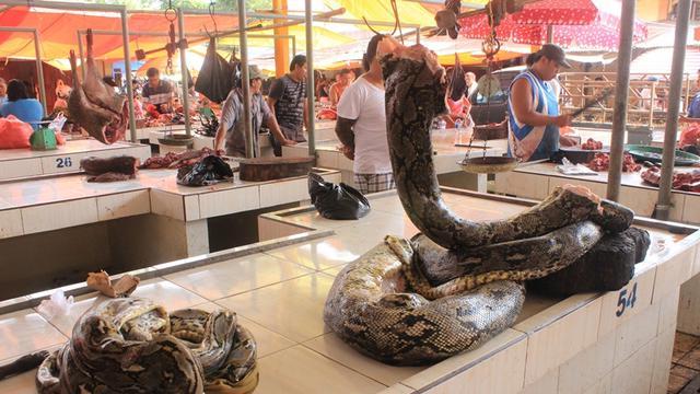 Syarat Supermarket di Manado Bisa Jual Daging Ular Piton