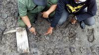 Jejak harimau mangsa ternak warga di Riau (Liputan6.com/M. Syukur)