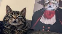 Potret hewan peliharaan bak anggota kerajaan. (sumber: Instagram/crownandpaw)