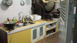 Foto yang diambil pada 20 Juni 2021 dan mendapat izin dari Radchadawan Peungprasopporn melalui akun Facebooknya pada 22 Juni 2021 menunjukkan gajah mencari makanan di dapur rumahnya, Pa La-U, Hua Hin, Thailand. Gajah mencari makanan melalui lubang di dapur. (Radchadawan PEUNGPRASOPPORN/FACEBOOK/AFP)