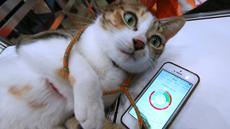 """Seorang staf Anicall menunjukkan aplikasi yang disebut """"Internet of Animals"""" pada Wearable Expo di Tokyo, Jepang (18/1). Aplikasi ini dilengkapi sensor gerak, suhu dan tekanan udara yang dapat menampilkan perasaan hewan. (AP Photo/Eugene Hoshiko)"""