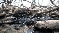 Oil spill yang telah membeku di sekitar tambak penangkap udang di perairan Muara Beting, Muara Gembong, Bekasi, Jawa Barat, Minggu (28/7/2019). Pencemaran minyak ini menyebabkan hasil tangkapan nelayan setempat menurun dan merusak hutan bakau fi sekitar Muara Beting. (merdeka.com/Iqbal S. Nugroho)