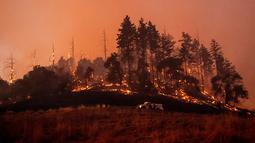 Api membakar lereng bukit di kawasan Sonoma, California, Amerika Serikat, Sabtu (26/10/2019). Sekitar 90 ribu warga diperintahkan untuk meninggalkan rumah-rumah mereka. (AP Photo/Nuh Berger)