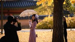 Seorang wanita berpose saat difoto di bawah pohon ginkgo di istana Gyeongbokgung di Seoul (31/10). -Pohon ginkgo secara luas dibudidayakan dan diperkenalkan pada awal sejarah manusia. (AFP Photo/Ed Jones)
