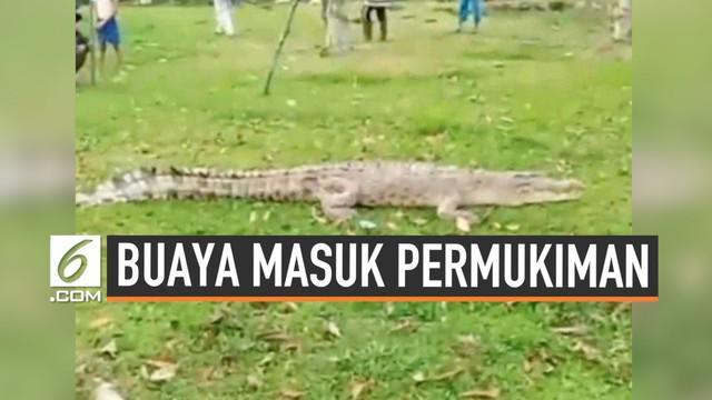 Warga Siak Riau dihebohkan buaya besar yang masuk area permukiman hari Rabu (4/9/2019). Buaya jadi tontonan sebelum ditangkap warga setempat.