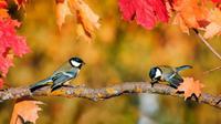 Ilustrasi burung. (iStockphoto)
