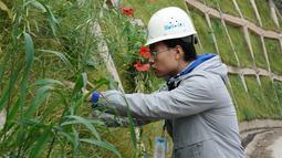 Seorang pekerja sedang memeriksa pertumbuhan vegetasi untuk gelaran Olimpiade Musim Dingin Beijing 2022 di Distrik Yanqing, Beijing, ibu kota China (28/9/2020). (Xinhua/Zhang Chenlin)