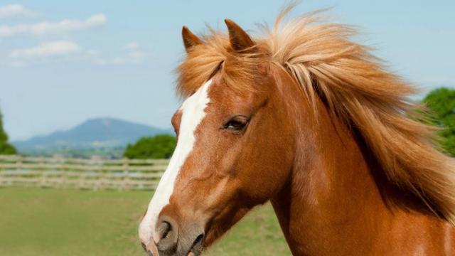 Hasil gambar untuk kuda