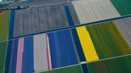 Warna-warni ladang bunga tulip De Keukenhof di Lisse, Belanda, Jumat (20/4). Terdapat tujuh juta tulip di ladang De Keukenhof. (AP Photo / Peter Dejong)