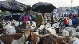 Calon pembeli memilih domba untuk perayaan Idul Adha di sebuah pasar kawasan Abidjan, Pantai Gading, Jumat (17/8). Dalam Perayaan Idul Adha, umat islam di seluruh dunia akan menyembelih hewan ternak. (AFP/ISSOUF SANOGO)