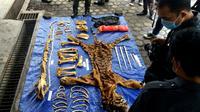 Perburuan liar terus dilakukan yang mengakibatkan jumlah Harimau Sumatra semakin kritis (Liputan6.com/Yuliardi Hardjo)