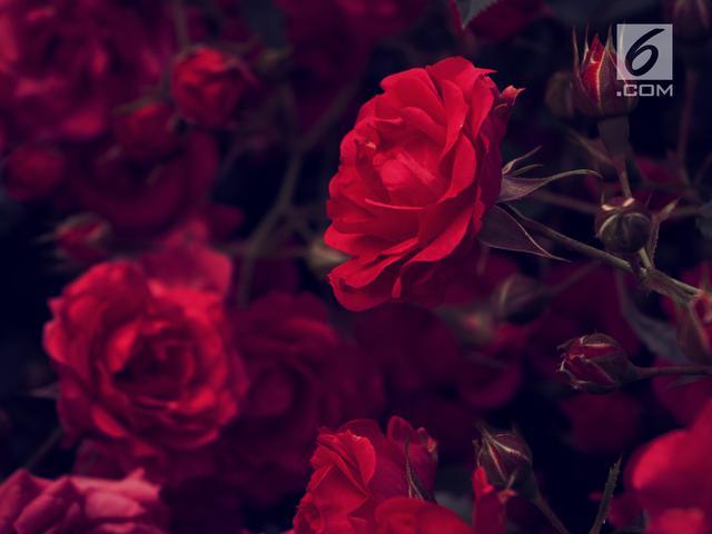 Download 1030+ Background Bunga Hati Paling Keren