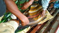 Jasad balita tenggelam di sungai dibalut dengan kain usai ditemukan setelah tiga hari dicari. (Liputan6.com/Dok Basarnas Pekanbaru/M Syukur)