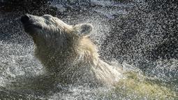 Hertha si beruang kutub mengibas-ngibaskan air ketika dia mandi di kandangnya saat suhu mencapai lebih dari 30 derajat Celcius  di kebun binatang Tierpark di Berlin, Jerman (26/7/2019). Rekor suhu terpanas baru tercatat di berbagai penjuru Eropa termasuk Jerman. (AFP Photo/John Macdougall)