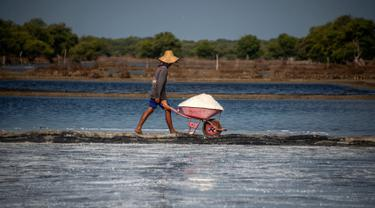 Petani mengangkut hasil panen garam di Sidoarjo, Jawa Timur, 16 September 2019. Menurut petani, meningkatnya produksi garam saat musim kemarau dari lima ton menjadi delapan ton per minggu, mengakibatkan harga garam di tingkat petani tradisional untuk kualitas nomor satu menurun. (Juni Kriswanto/AFP)