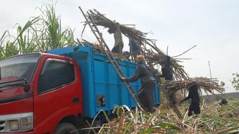 Penggabungan 35 Pabrik Gula Diharap Mampu Tekan Impor dan Buka Lapangan Kerja