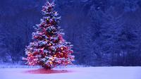 Kamu yang belum punya pohon untuk menyambut Natal 2015, ada beberapa alternatif hiasan yang gak kalah ciamik nih, guys. Check it out.