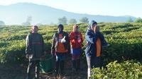 Sejumlah buruh petik teh di perkebunan di Desa Tarumajaya, Kecamatan Kertasari, Kabupaten Bandung, menyiangi tubuhnya sebelum beraktivitas. Hal ini dilakukan mengingat suhu di Kertasari lebih dingin dari biasanya. (Liputan6.com/Huyogo Simbolon)