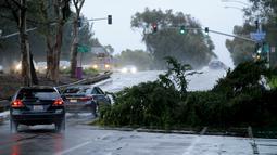 Kendaraan melintasi pohon yang tumbang dan menghalangi jalan  di California, Rabu (6/1/2016). Badai El Nino melanda wilayah selatan California dengan membawa hujan deras ke kawasan yang sempat dilanda kekeringan. (REUTERS/Mike Blake)