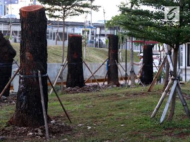 Delapan pohon yang berasal dari Jalan Sudirman dipindah ke kawasan RTH Kalijodo, Jakarta Utara, Kamis (15/3). Pohon yang dipindah merupakan jenis mahoni. (Liputan6.com/Arya Manggala)