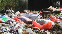 Gerombolan monyet liar melintasi tumpukan sampah di pasar Ciampea Baru,Bogor Selasa (07/08). Monyet tersebut berasal dari tebing kapur Ciampea. (Merdeka.com/Arie Basuki)
