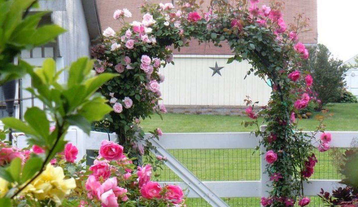Download 6600 Gambar Bunga Mawar Tumpuk Paling Cantik