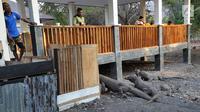 Guide taman nasional memantau komodo di Pulau Rinca, Taman Nasional Komodo, NTT, Minggu (14/10). Pulau Rinca dapat dijangkau selama dua jam dari Labuan Bajo dengan menggunakan perahu kayu. (Merdeka.com/Arie Basuki)