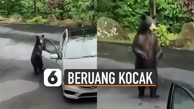 Tingkah kocak ditunjukkan oleh seekor beruang ketika ketahuan membuka pintu mobil yang sedang diparkir.