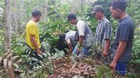 Petugas BBKSDA Riau dan sejumlah warga mengecek lokasi diduga sarang harimau di kebun karet. (Liputan6.com/M Syukur)