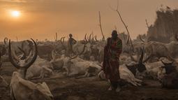 Penggembala dari suku Dinka berdiri di kamp ternak mereka di Mingkaman, Lakes State, Sudan Selatan, Minggu (4/3). Selama musim kemarau, penggembala dari dataran tinggi akan pindah ke dataran rendah dan dekat dengan Sungai Nil. (Stefanie GLINSKI/AFP)