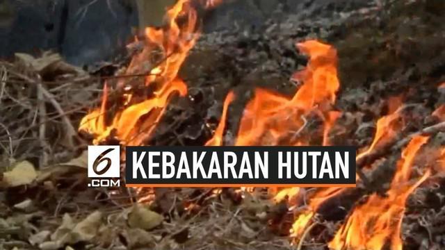 Sudah tiga hari kebakaran hutan dan lahan terjadi di Polewali Mandar, Sulawesi Barat. Sulitnya medan membuat mobil damkar sulit masuk dan pemadaman api dilakukan secara manual.