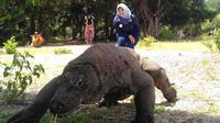 Pernyataan kontroversial mengenai Taman Nasional (TN) Komodo, dilontarkan Gubernur Nusa Tenggara Timur, Viktor Bungtilu Laiskodat. Pelaku pariwisata mengaku khawatir TN Komodo akan dijauhi wisatawan mancanegara.