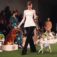 Penonton dibuat salah fokus dengan pertunjukkan anjing di New York Fashion Week 2019 (Foto: Instagram.com/Lelarose)