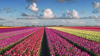 Ilustrasi taman bunga di Amsterdam, Belanda. (credit: blog.radissonblu.com)