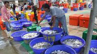 Pedagang menata ikan di Pelelangan ikan Muara Baru, Jakarta, Sabtu (6/7/2019). Berdasarkan data Kementerian Kelautan dan Perikanan, selama semester I-2019 nilai ekspor produk perikanan Indonesia mencapai Rp40 triliun. (Liputan6.com/Angga Yuniar)