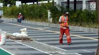 Pekerja melakukan pengerjaan tahap akhir renovasi trotoar di sekitar Jalan Gerbang Pemuda, Senayan, Jakarta, Selasa (29/5). Penataan trotoar menjadi prioritasmengingat Asian Games tinggal beberapa bulan ke depan. (Liputan6.com/Helmi Fithriansyah)