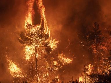 Kobaran Api saat melahap pepohan hutan di dekat desa Makrimalli di pulau Evia, timur laut Athena, Yunani (13/8/2019). Ratusan penduduk desa diungsikan pada 13 Agustus akibat kebakaran hutan yang terjadi. (AFP Photo/Angelos Tzortzinis)