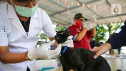 Paramedis dari pusat kesehatan hewan (Puskeswan) Dinas Ketahanan, Pertanian, dan Perikanan Kota Adm. Jakarta Selatan mengecek seekor kucing sebelum menyuntikkan vaksin anti rabies secara gratis di kawasa Tebet, Jakarta, Sabtu (31/10/2020). (Liputan6.com/Faizal Fanani)