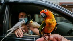 Burung-burung peliharaan terlihat saat pemberkatan drive-thru hewan peliharaan di Manila, Filipina, 4 Oktober 2020. Pemberkatan drive-thru hewan peliharaan tersebut diadakan di tengah pandemi COVID-19 untuk merayakan Hari Hewan Sedunia setiap tanggal 4 Oktober. (Xinhua/Rouelle Umali)