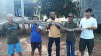 Warga Kampung Makrik RT 04/04, Rawalumbu, Bekasi Timur menangkap ular sanca, Sabtu (26/6/2021). (Liputan6.com/Fachrur Rozie)