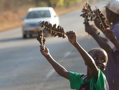 Sejumlah anak menjual daging tikus yang sudah diolah menjadi makanan di Chidza, Zimbabwe (23/9). Hewan kecil yang ditangkap di ladang jagung ini biasanya dipanggang lalu disajikan sebagai makanan oleh warga setempat. (AP Photo/Tsvangirayi Mukwazhi)