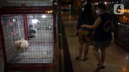 Warga melihat anjing di salah satu toko hewan peliharaan di Jakarta, Kamis (29/10/2020). Sejumlah toko hewan peliharaan sepi pelanggan akibat DKI Jakarta masih memberlakukan PSBB transisi untuk memutus penyebaran COVID-19. (merdeka.com/Imam Buhori)